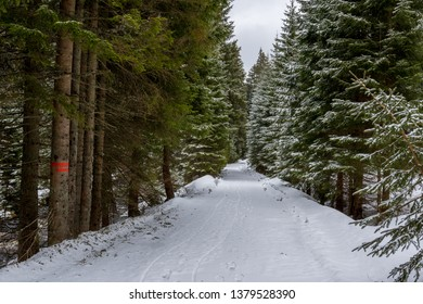 Cross country skiing trail in Sumava mountains, near Modrava village during late winter. Cloudy day in March. South Bohemia, Czech republic, Europe.