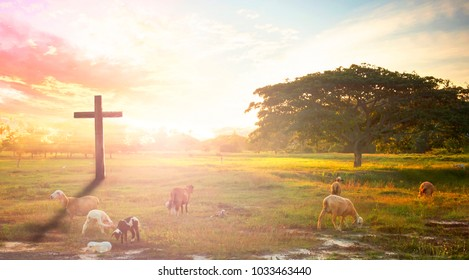 Cross in meadow and lamb on sunset