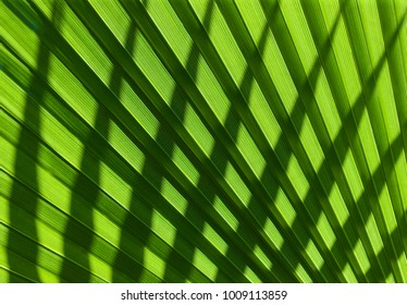 cross pattern of natural leaves texture, graphic element