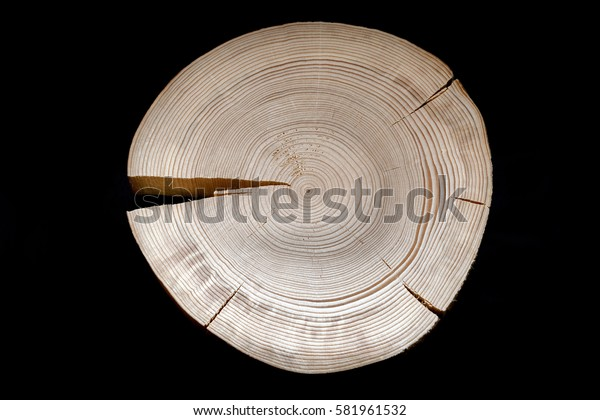Cross saw cut pine with numerous annual rings and one big and several small cracks on black background.