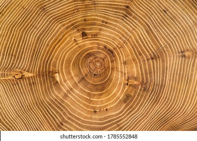 Cross section of acacia tree with annual growth rings (annual rings). Full frame of wood slice for background