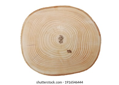 Cross section of ash tree trunk with growth rings isolated on white background.