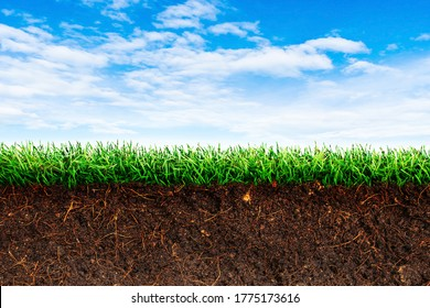 Cross section brown soil and green grass in underground with blue sky in background.