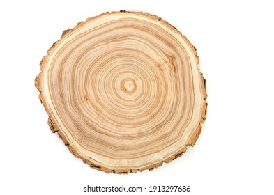 Cross section of a cut wood tree trunk slice with wavy pattern cracks and rings sawed down from the woods