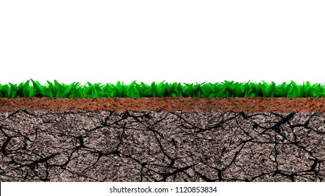 Cross section of grass and dry cracked soil texture, isolated on white background.