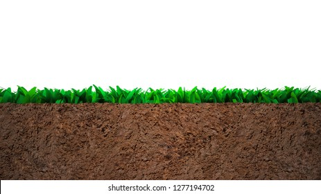 Cross section of grass and soil, isolated on white background.