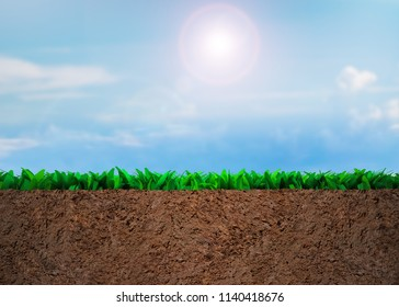 Cross section of grass and soil, on sunny sky clouds background.