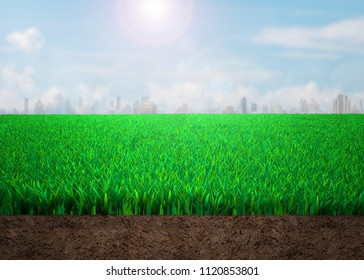 Cross section of grass and soil with sunny sky clouds cityscapes background.