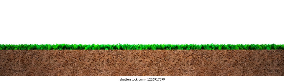 Cross section of green grass and soil, isolated on white background.