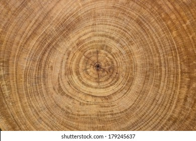 cross section log texture