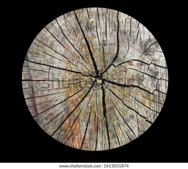 Cross section of an old piece of wood against a black background