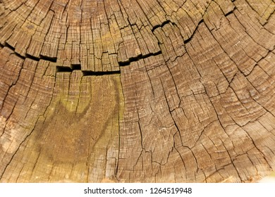 Cross section of the old wood and view on concentric rings, rustic photo