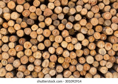 Cross section of pine Logs