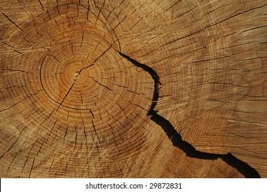 Cross section through the tree log