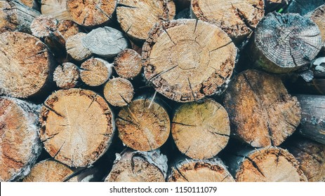 Cross section of the timber, firewood stack for the background. A lot of cutted logs. Stack of sawn logs. Natural wooden decor background. Pile of chopped fire wood prepared for winter.