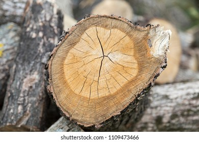 Cross section of tree. Close-up and a blured background.
