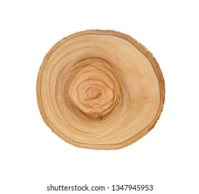 Cross section of tree trunk with annual growth rings isolated on white background