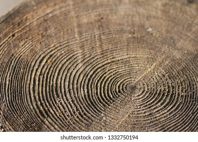 Cross section of tree trunk with growth rings.