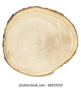 Cross section of tree trunk isolated on white, clipping path included
