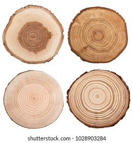 Cross section of tree trunk showing growth rings collection isolated on white background.