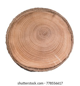 Cross section of tree trunk showing growth rings isolated on white background
