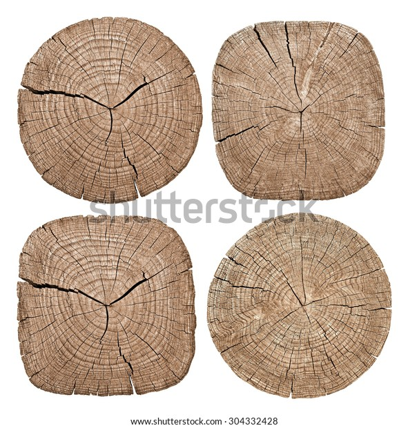 Cross Section Tree Trunk Showing Growth Stock Photo Edit