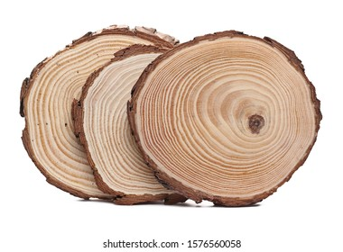 Cross section of tree trunks, stumps, isolated on white background
