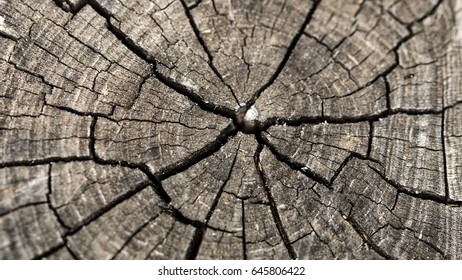 Cross Section Wood Background