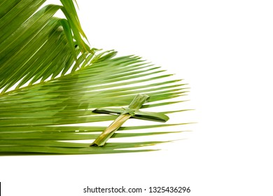 Cross shape of palm leaf on palm branches with green leaves isolated over white background. Palm Sunday concept