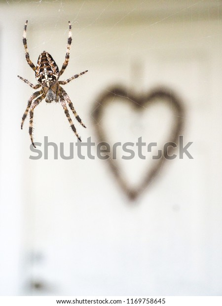 Cross spider hanging in silk thread in front of white door entrance with big brown heart