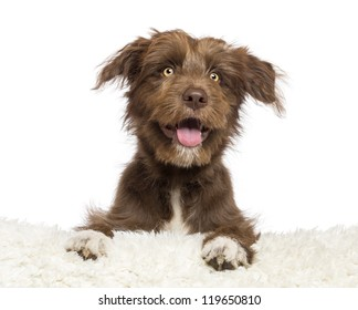 Crossbreed dog lying on white fur and looking away against white background