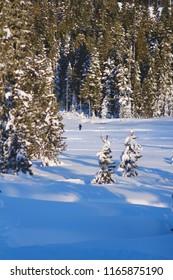 Crosscounty skiier enjoying the snowy alpine