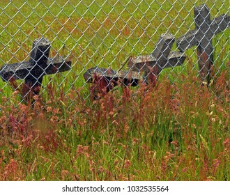 Crosses leaning against a cemetery chainlink fence.   On the wild side the grass and weeds are entangled, colorful and long while within the fence the lawn well kept.