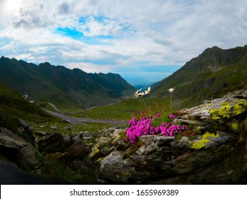 Crossing Carpathian mountains in Romania, Transfagarasan is one of the most spectacular mountain roads in the world