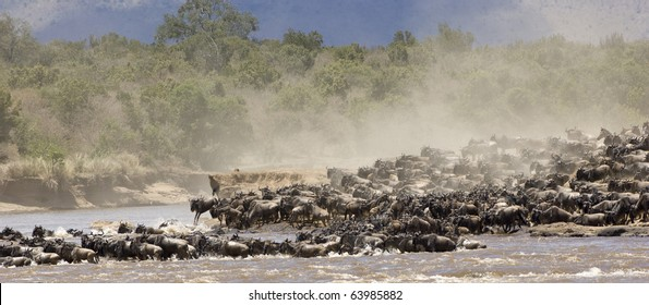 Crossing the Mara river during the great migration in Kenya