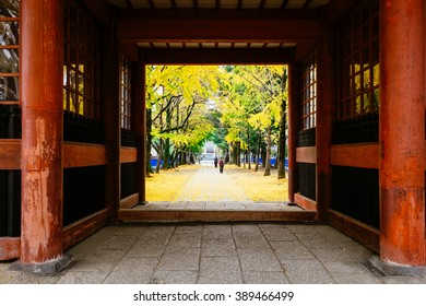 Crossing the red sacred gate with background of nice yellow gingko