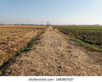 Cross-roads between villages in Indonesia. Village road lighting on agricultural land. Village infrastructure for transportation