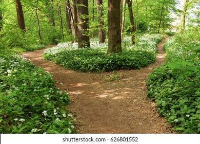 Crossroads. Choose a road. I'm lost. Indecision. Fear of deciding. Enchanted woods