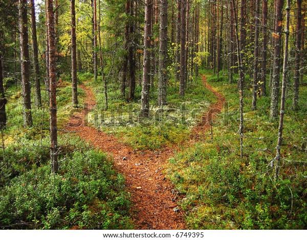 Carrefour de la forêt de Karélian