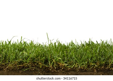 cross-section of grass sod isolated on white