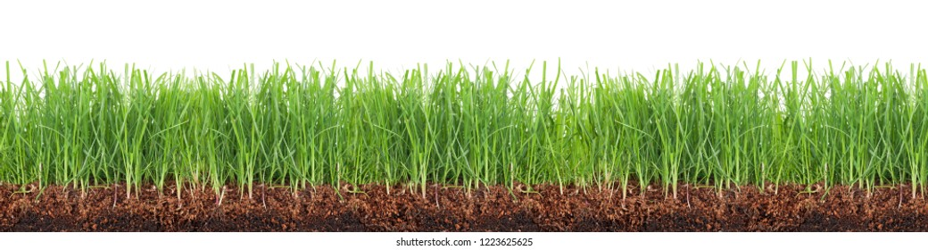 Cross-section of a green meadow isolated on white background