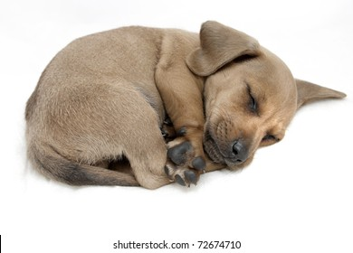 Crouching puppy sleeping