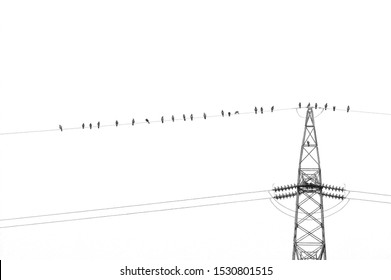 Crow birds on wire of high voltage electric tower isolated on white. Electricity, electric power, overhead power line and technology concepts.
