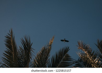 crow flaying near the palms