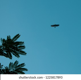 crow flaying near the trees branches