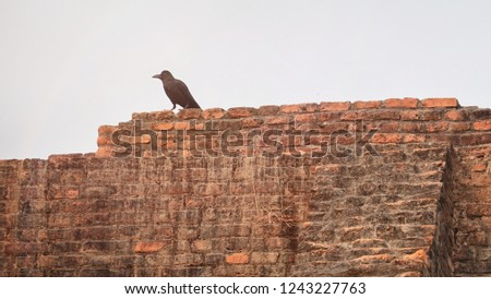 74cb5965d70 Crow Indian Historic Site Processed Rookie Stock Photo (Edit Now ...