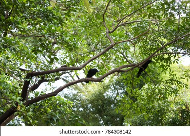 the crow on the tree