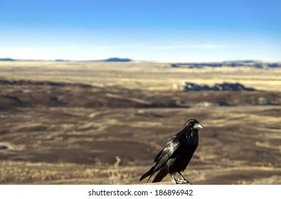 Crow at the Painted Desert at Petrified Forest National Park, Arizona  Animal / Bird / Crow /  Raven / Arizona / Desert Background / Las Vegas / Utah / New Mexico Background