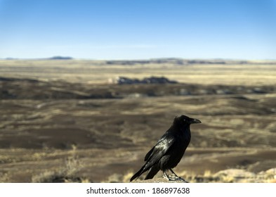 Crow at the Painted Desert at Petrified Forest National Park, Arizona Animal / Bird / Crow / Arizona / Desert Background / Las Vegas / Utah / New Mexico Background