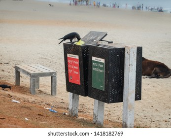 A crow picking at rubbish in a bin placed near to the entrance to the Main beach at Gokarna,as a cow lays nearby on the sand.